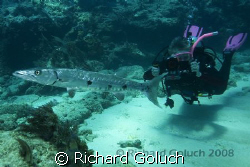 Diver taking footage of the Great Barracuda-Canon 5D-17-4... by Richard Goluch 